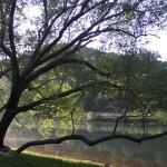 TreeMay2012 (3)